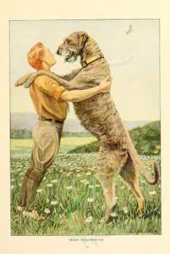 dogs_wolves_foxes-00124 - Irish Wolfhound [1862x2770]