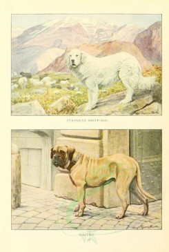 dogs_wolves_foxes-00134 - Pyrenean Sheep-dog, Mastiff [1862x2770]