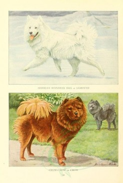 dogs_wolves_foxes-00138 - Siberian Reindeer Dog or Samoyed, Chow-Chow or Chow [1862x2770]