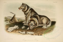 dogs_wolves_foxes-00146 - Esquimaux Dog [2879x1925]