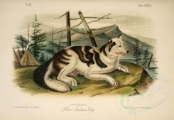 dogs_wolves_foxes-00147 - Hare-Indian Dog [2879x1990]