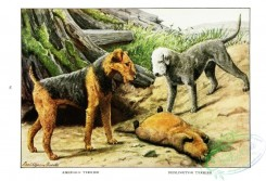 dogs_wolves_foxes-00189 - Airedale Terrier, Bedlington Terrier