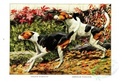 dogs_wolves_foxes-00199 - English Foxhound, American Foxhound