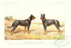 dogs_wolves_foxes-00221 - Shepherd Dog