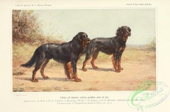 dogs_wolves_foxes-00232 - Gordon Setter Dog