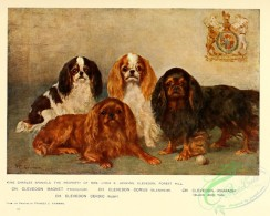 dogs_wolves_foxes-00237 - King Charles Spaniel Dog