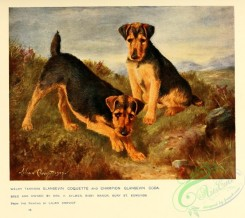dogs_wolves_foxes-00240 - Welsh Terrier Dog