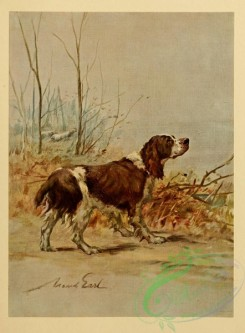 dogs_wolves_foxes-00245 - English Springer Dog