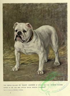 dogs_wolves_foxes-00264 - Bulldog Dog
