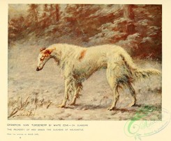 dogs_wolves_foxes-00280 - Borzoi Dog