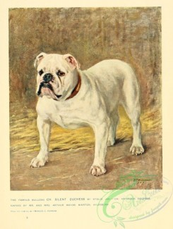 dogs_wolves_foxes-00281 - Bulldog Dog