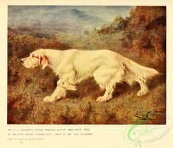 dogs_wolves_foxes-00285 - English Setter Dog