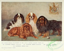 dogs_wolves_foxes-00301 - King Charles Spaniel Dog
