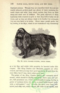 dogs_wolves_foxes-00544 - black-and-white 044-King Charles Spaniel Dog