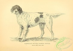 dogs_wolves_foxes-00657 - black-and-white 011-Setter Dog