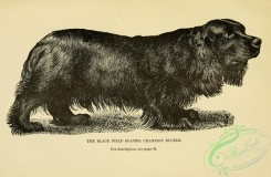 dogs_wolves_foxes-00706 - black-and-white 027-Black Field Spaniel Dog