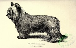 dogs_wolves_foxes-00738 - black-and-white 017-Skye Terrier Dog