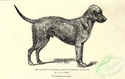 dogs_wolves_foxes-00743 - black-and-white 022-Bedlington Terrier Dog