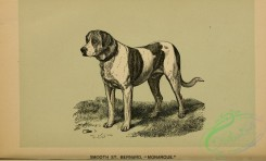 dogs_wolves_foxes-00770 - black-and-white 002-Smooth St-Bernard Dog