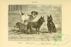 dogs_wolves_foxes-00996 - black-and-white 051-Dog