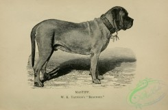 dogs_wolves_foxes-01018 - black-and-white 002-Mastiff Dog