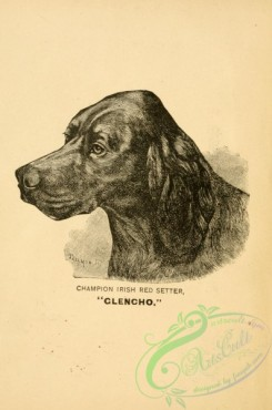 dogs_wolves_foxes-01050 - black-and-white 001-Irish Red Setter Dog