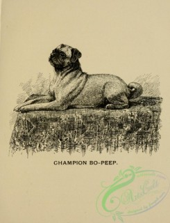 dogs_wolves_foxes-01077 - black-and-white 009-Pug Dog