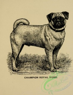 dogs_wolves_foxes-01082 - black-and-white 014-Pug Dog