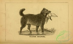 dogs_wolves_foxes-01114 - black-and-white 018-Water Spaniel Dog