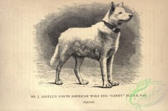 dogs_wolves_foxes-01195 - black-and-white 022-North American Wolf Dog