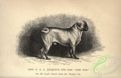 dogs_wolves_foxes-01222 - black-and-white 049-Pug Dog