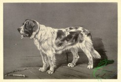 dogs_wolves_foxes-01308 - black-and-white 003-Rough-Coated St-Bernard Dog