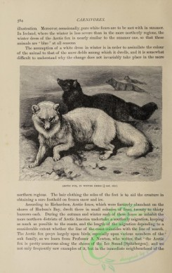 dogs_wolves_foxes-01389 - black-and-white 037-Arctic Fox