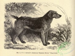 dogs_wolves_foxes-01502 - black-and-white 043-Airedale Terrier Dog