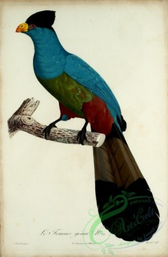 exotic_birds-00081 - Turaco, 4