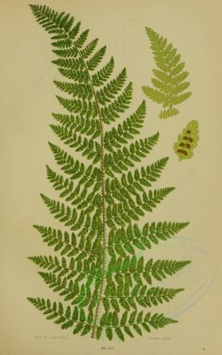 ferns-00026 - RIGID LASTREA [2251x3588]