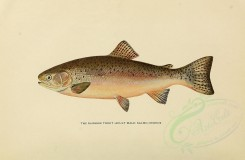 fishes-00060 - RAINBOW TROUT [3102x2031]