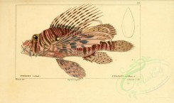 fishes-00270 - Red Lionfish [3534x2093]
