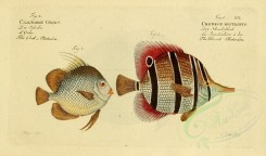 fishes-00492 - Beack Chetodon, Orb Chetodon [2281x1340]