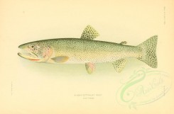fishes-02970 - Alaska Cutthroat Trout [2990x1970]