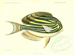 fishes-03462 - Lined Surgeonfish [4158x3093]