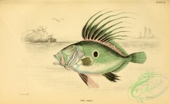 fishes-04929 - Dory