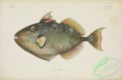 fishes-06630 - 114-leiurus stellatus