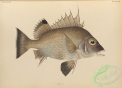 fishes-07179 - 012-anoplus