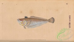 fishes-07405 - 007-Common Weever