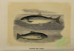 fishes-07518 - 011-Salmon, Trout