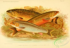 fishes_best-00001 - Brook Trout, Arctic Char