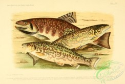 fishes_best-00003 - HYBRIDS
