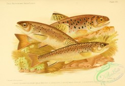 fishes_best-00009 - TROUT