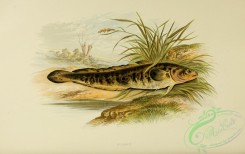 fishes_best-00012 - BURBOT